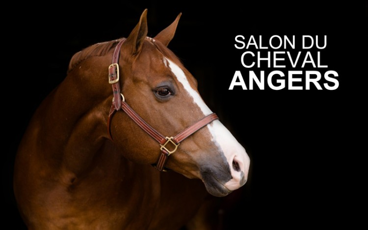 salon-cheval-angers